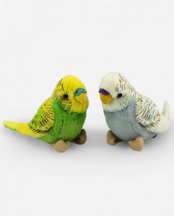 A Pair of Budgies