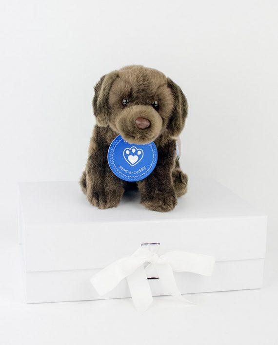 Chocolate Labrador Soft Toy