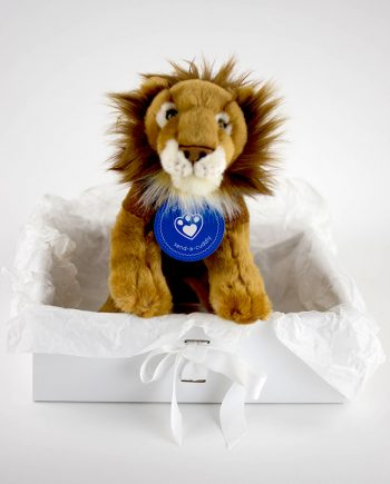 Stunning African Lion gift