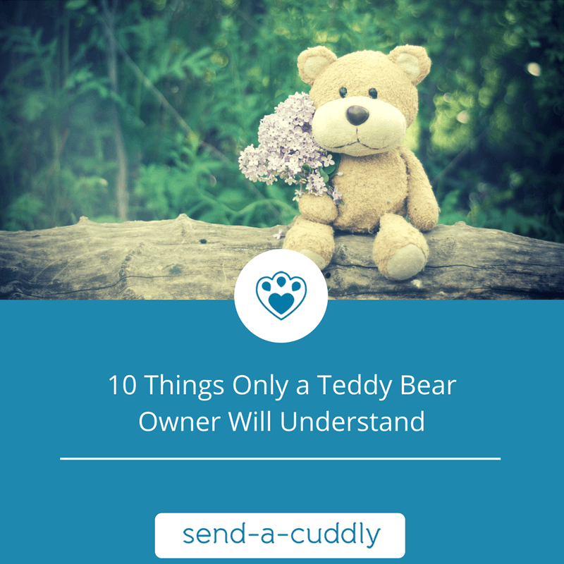 10 Things Only A Teddy Bear Owner Will Understand - Send A Cuddly