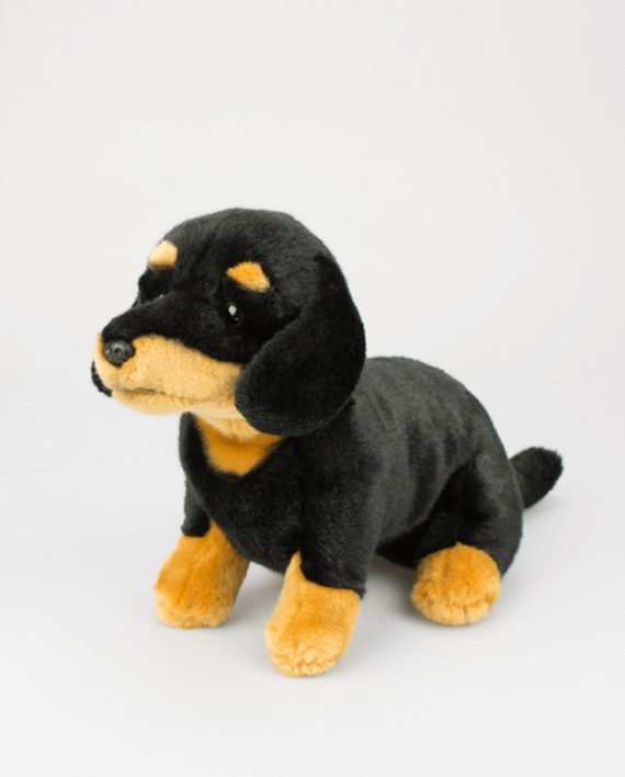 Delightful Black and Tan Dachshund