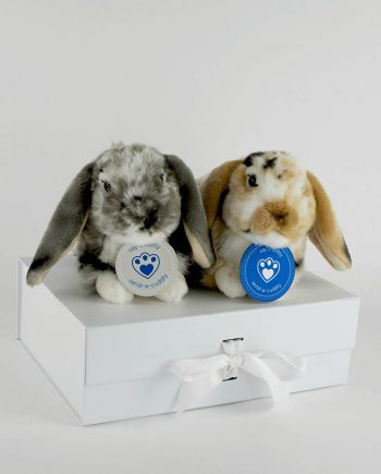 Lop Eared Rabbits gifts