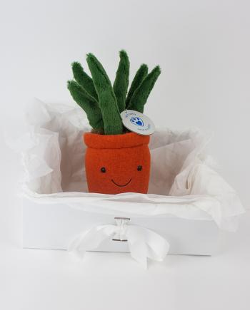 Cuddly Yukka Plant