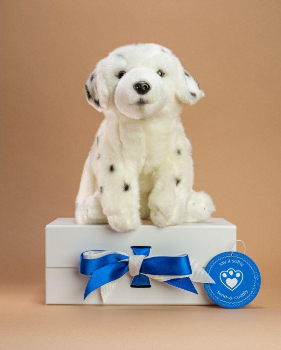Dalmatian Cuddly Toy - Send a Cuddly